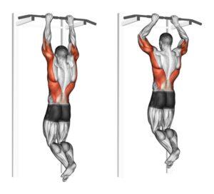 muscoli coinvolti nelle trazioni alla sbarra