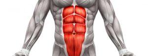Muscoli del retto addominale evidenziati in rosso